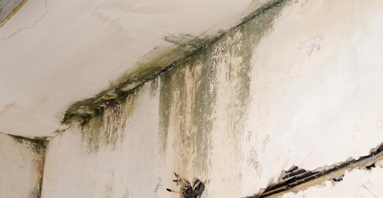 Hoe herken je schimmel op de muren?